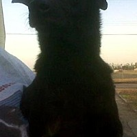 Adopt A Pet :: Eeyore - Fresno, CA