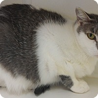 Adopt A Pet :: Hope - Cloquet, MN