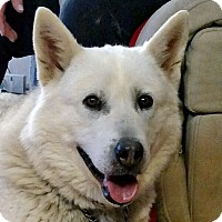 Adopt A Pet :: SESI - Adoption Pending - Boise, ID