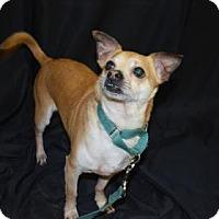 Adopt A Pet :: Neville - Bradenton, FL