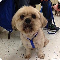 Adopt A Pet :: Aeden - Studio City, CA