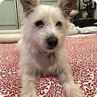 Adopt A Pet :: Buster - Costa Mesa, CA