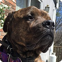 Adopt A Pet :: AXLE - Sterling, MA