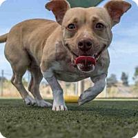 Adopt A Pet :: CALI - Martinez, CA