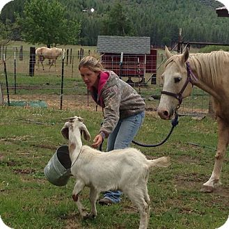 Quarterhorse Mix for adoption in Greenville, California - Sandy