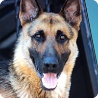 Adopt A Pet :: REESE VON RUNKELN - Los Angeles, CA