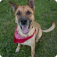 Adopt A Pet :: Arya - Drumbo, ON