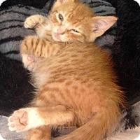 Adopt A Pet :: Edison - River Edge, NJ
