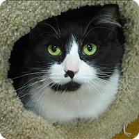 Adopt A Pet :: Antonia - Sherwood, OR