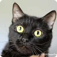 Adopt A Pet :: Seven - Bedford, VA