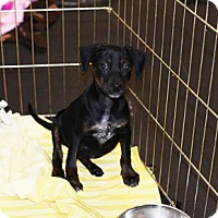 Adopt A Pet :: Chispa - Jupiter, FL