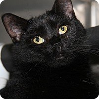 Adopt A Pet :: Katie Purry (Spayed)-New Photo - Marietta, OH