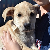 Adopt A Pet :: Princess Omni - Acworth, GA