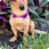 Adopt A Pet :: Astoria - Weston, FL
