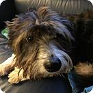 Adopt A Pet :: GRAYSON in Rhode Island