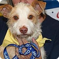 Adopt A Pet :: Luke - Orange Cove, CA