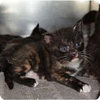 Adopt A Pet :: Dimples - Dallas, TX