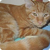 Adopt A Pet :: Greg - Medina, OH