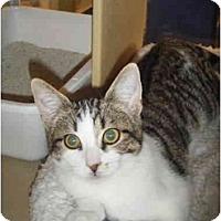 Adopt A Pet :: Priscilla - Brea, CA