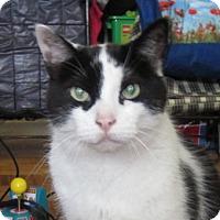 Adopt A Pet :: Kevin - Toronto, ON