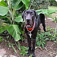 Adopt A Pet :: Venus - Virginia Beach, VA