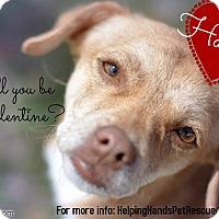 Adopt A Pet :: Hanna - Gainesville, FL