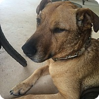 Adopt A Pet :: Gabby - Natchitoches, LA