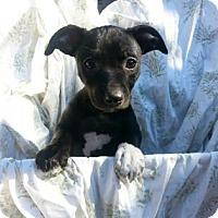 Adopt A Pet :: Alabama - Austin, TX