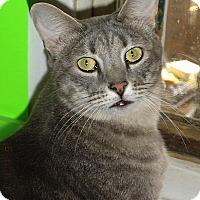 Adopt A Pet :: Santos - Denver, CO