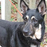 Adopt A Pet :: Titan - Inverness, FL