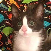 Adopt A Pet :: Parsley - Humble, TX