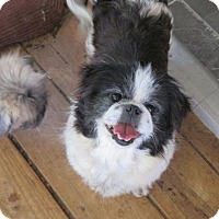 Adopt A Pet :: Bailey - Oakdale, TN