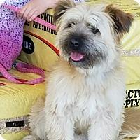 Adopt A Pet :: ACE - Gustine, CA