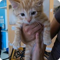 Adopt A Pet :: Fred - Fort Collins, CO