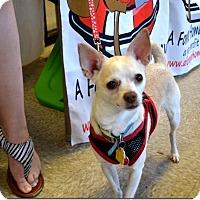 Adopt A Pet :: Dina - Tavares, FL