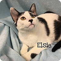 Adopt A Pet :: Elsie - Foothill Ranch, CA