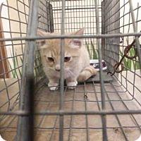 Adopt A Pet :: *OSCAR - Ocala, FL