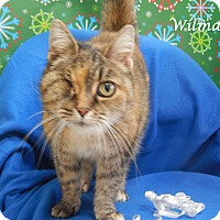 Adopt A Pet :: Wilma - Bucyrus, OH