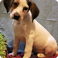 Adopt A Pet :: Galahad - Hagerstown, MD