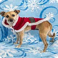 Adopt A Pet :: Tommy - Morgan Hill, CA