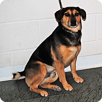 Adopt A Pet :: Chester - Parsons, KS