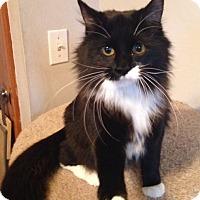 Adopt A Pet :: Jade - Warrenton, MO