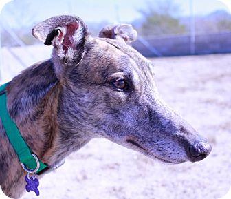 Greyhound Dog for adoption in Tucson, Arizona - Declan