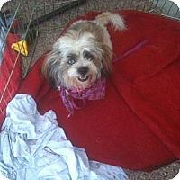 Adopt A Pet :: Monty - Scottsdale, AZ