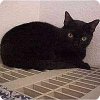 Adopt A Pet :: Regan - El Cajon, CA