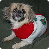 Adopt A Pet :: Baby - Hazard, KY