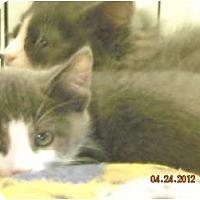 Adopt A Pet :: Benjamin - Riverside, RI