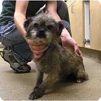 Adopt A Pet :: Rambler - Georgetown, KY