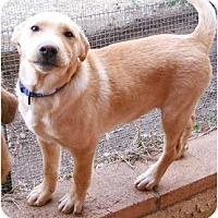 Adopt A Pet :: Lil Abner - dewey, AZ