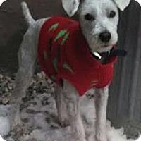 Adopt A Pet :: Casper - Lynnwood, WA